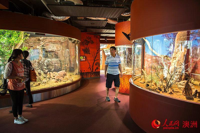 人民网悉尼12月4日电(周诞) 悉尼野生动物园位于悉尼市中心情人港之畔,作为悉尼最具名气的室内动物园,这家澳式动物园常年举办公共教育展览、动物饲养员互动、喂食动物、参观栖息地等精彩纷呈的活动。 该园于2006年开放,占地面积仅7000平方米,但却拥有有千米长的参观线,该园内展区设计颇具匠心,展出包括大袋鼠、考拉、袋獾、食火鸡和湾鳄在内过百种澳大利亚本土动物。 整条参观线分10个展区,分别是热带蝴蝶、袋獾洞、桉树谷、沙袋鼠岩、丹特里雨林、袋鼠路径、卡卡杜峡谷、邂逅考拉、小虫花园、夜行动物区,此外还有个开展教