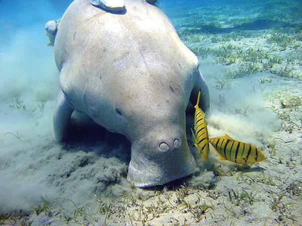 鲨鱼不是国家保护动物图片大全